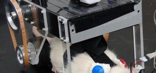 Проект RatCar - биоробот