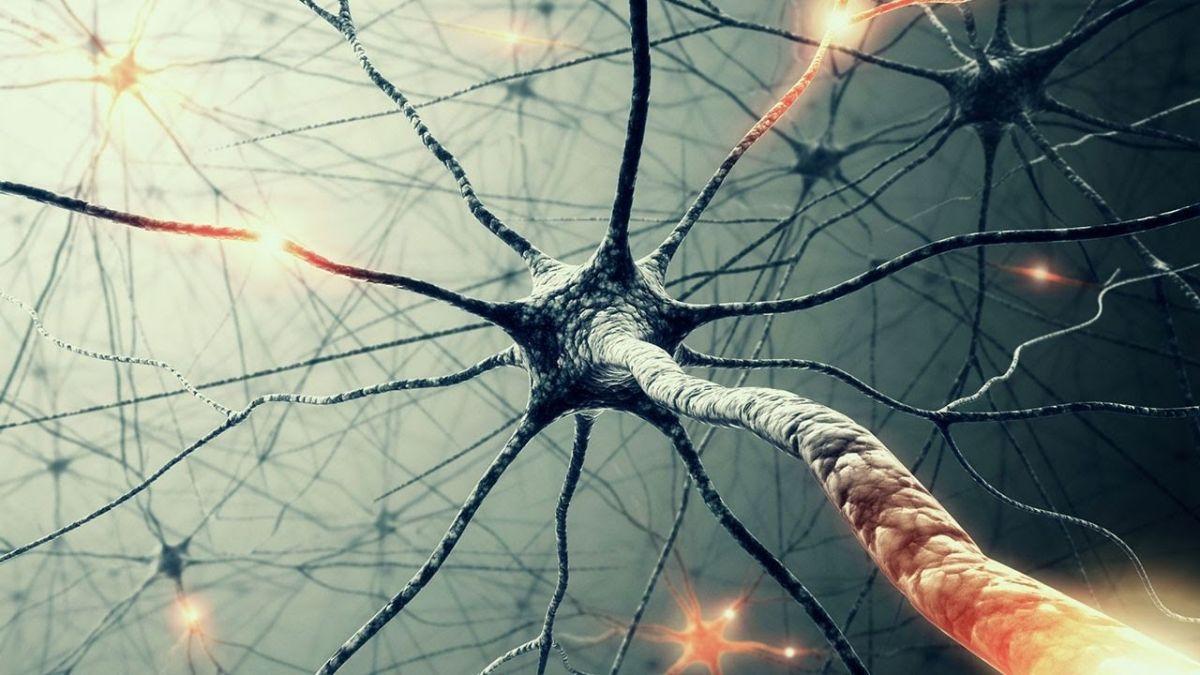 Насколько полезные нейронные сети?