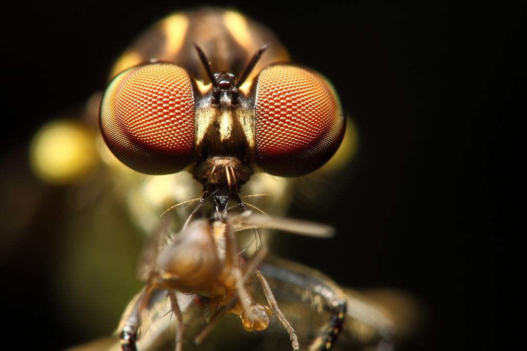 киборги насекомые