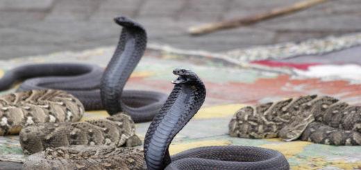 Наночастицы от укусов змей